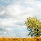 Lonely Tree by Jacinthe Brault