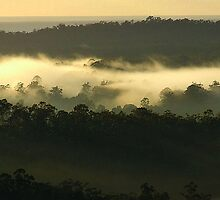 """""""Trees in the Mist"""" by debsphotos"""