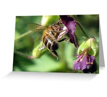 Dratted Pollen Gets Everywhere Greeting Card