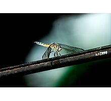 Dragonfly on a Wire Photographic Print