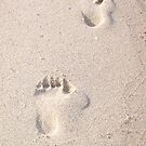 Footprints by mreedy78