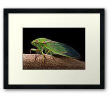 Greengrocer 2 Framed Print
