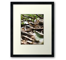 Speckled Wood Framed Print