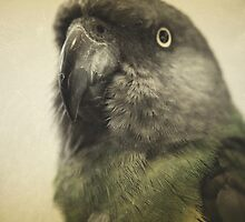 the feathery fluff of Bahb by Jill Auville