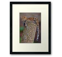 A Leopard's Tail Framed Print