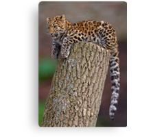A Leopard's Tail Canvas Print