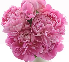 Pink Paeonies by Ann Garrett