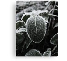 A Small Frosty One Canvas Print