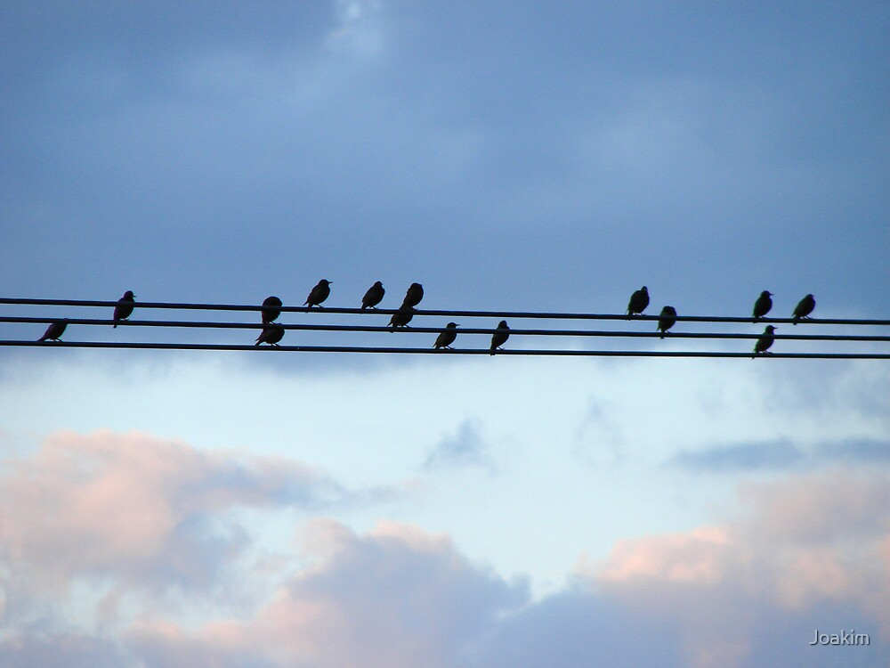 High Wire Birds by Joakim