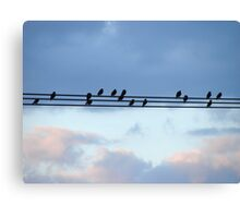 High Wire Birds Canvas Print