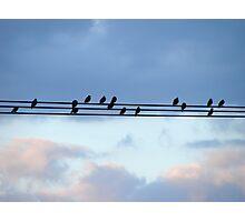 High Wire Birds Photographic Print