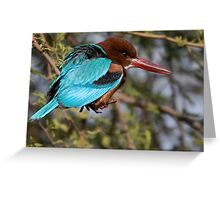 White Breasted Kingfisher III Greeting Card