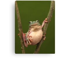 Stuffed Canvas Print