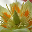 Tree Flower by RockyWalley