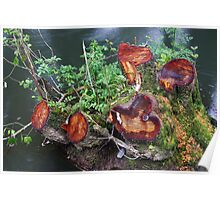 Five stumps Poster