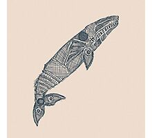 gray whale sketch Photographic Print