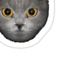 Le Chat Sticker