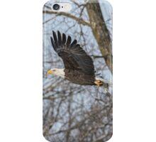 Adult American Bald Eagle  iPhone Case/Skin