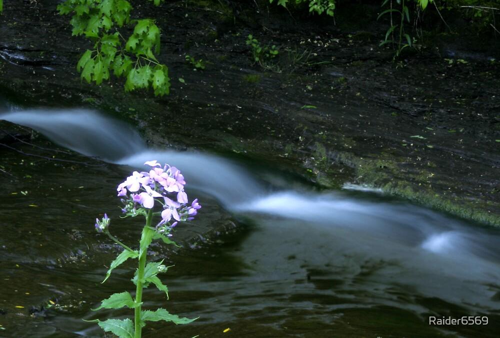 Flower By Stream by Raider6569