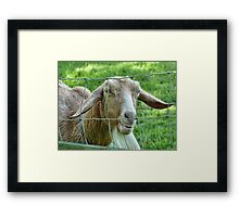 This Old Goat Has A Sense Of Humour  Framed Print