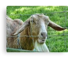 This Old Goat Has A Sense Of Humour  Canvas Print