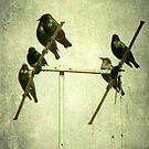 Starlings by Kitsmumma