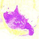 My pussy by MsKatalina