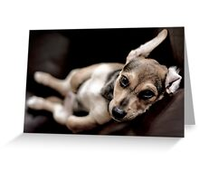 relaxed pup Greeting Card