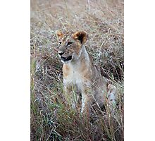 Young Lion in the Grass, Maasai Mara, Kenya Photographic Print