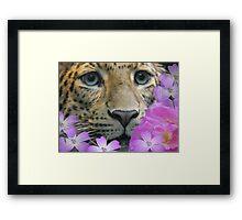 my leopard  looking a bit happier Framed Print