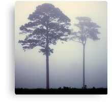 Foggy Pasture Giants Canvas Print