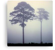 Foggy Pasture Giants Canvas Print