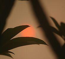 Suns Up by FrankCopine