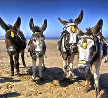 Donkeys HDR by Dfilmuk Photos