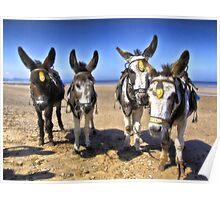 Donkeys HDR Poster