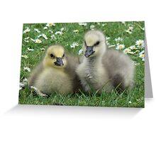 Lesser Snow Goose Goslings Greeting Card