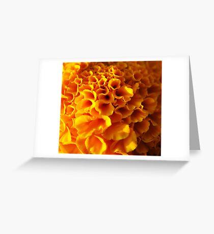 Macro Ruffles... Greeting Card