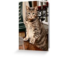 "*•.¸♥♥¸.•*Hear Me I'm Taking A Stand ""More Treats""*•.¸♥♥¸.•* Greeting Card"