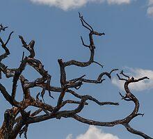 Dragon Tree - Tarangire National Park, Tanzania by Susana Weber