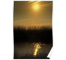 Golden Wetlands Poster