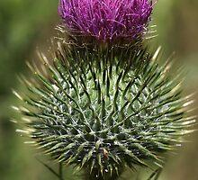 Super Spiky by Joy Watson