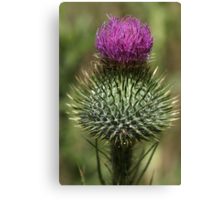 Super Spiky Canvas Print