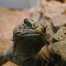 Turtleicious by KellyGirl