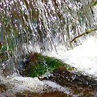 water by delfinada