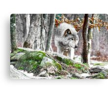 The Forest Hunter Canvas Print