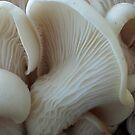 Mushrooms are beautiful too! by KellyGirl