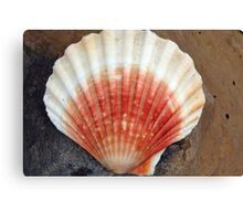 Red And White Seashell Canvas Print
