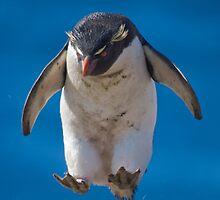 Rockhopper Penguin by Simon Coates