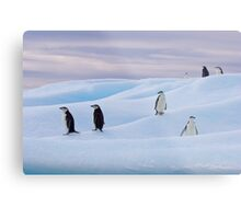 Chinstrap Penguins - Antarctica Metal Print