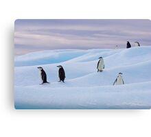 Chinstrap Penguins - Antarctica Canvas Print